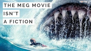 The Meg movie isn't a fiction: 25 million-year-old tooth proves that giant sharks are real!