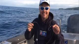 ifish tv team up with nomad sports fishing and trinity wharf tauranga