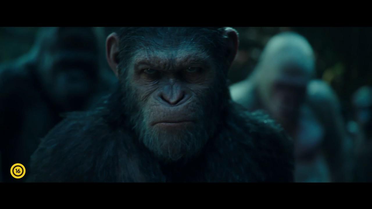 a majom látványa)