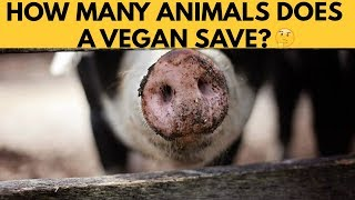 How Many Animals Does A Vegan Save | The Cold Truth