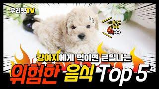 강아지에게 치명적인 음식 Top 5 (with 티컵푸들…