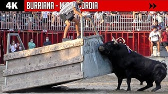 Imagen del video: TOROS: Impactante duelo de ganaderías en Burriana
