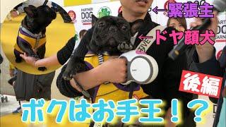 フレブル子犬タプさん生後1歳と18日目♪ 昨日に引き続き、犬イベント「パ...
