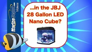 Will It Fit? - JBJ 28 Gallon LED Nano Cube