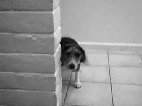 ASPCA