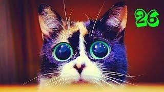КОТЫ ПРИКОЛЫ Приколы с котами Самые смешные коты и кошки Подборка смешная супер котята 2017