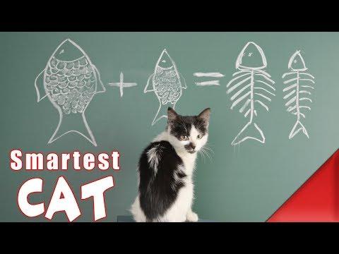 Top 10 Most Intelligent Cats