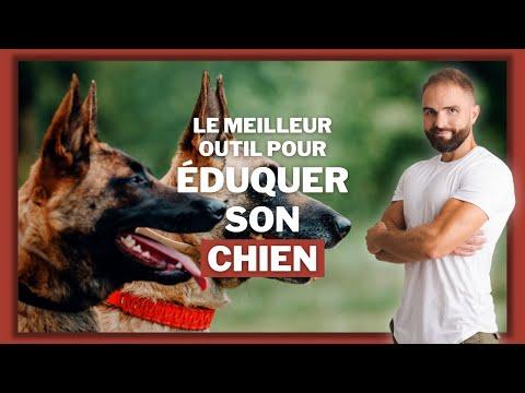 Nettoyage Oreille Chien - 10 astuces à savoir - Techniques de base - Blog chien