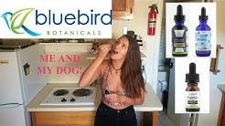 Bluebird Botanicals CBD oil review (for pets too)