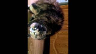 кошка глаза-фары зеленые