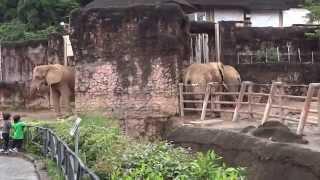 Япония. Зоологический парк ТАМА в Хино /Japan. ZOO Tama in Hino.