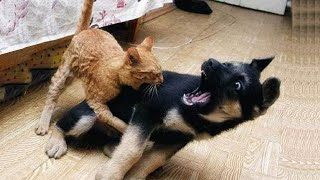 Cat attack compilation _ funniest cat attack video compilation 2021