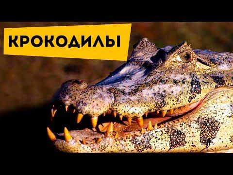 Вопрос: В какой стране крокодилы являются домашними животными?