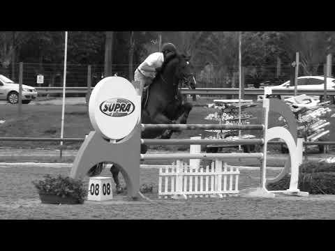 Top Horse Group  Daniel HF Imperador 2018