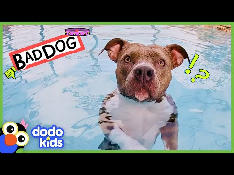 Get This Pit Bull Out Of The Pool!   Bad Boys And Girls   Dodo Kids