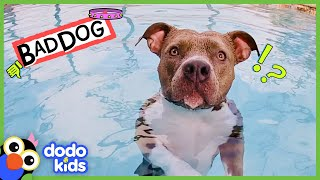 Get This Pit Bull Out Of The Pool! | Bad Boys And Girls | Dodo Kids