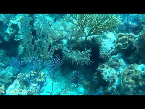 Scuba Diving Grand Turk and st. Kitts Diving
