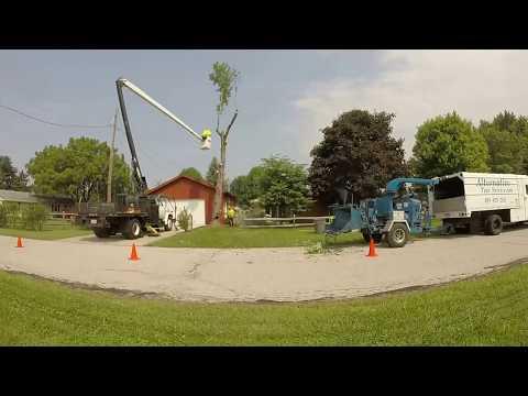 Maple Tree Removal -  Whitehouse, Ohio 9/3/2015