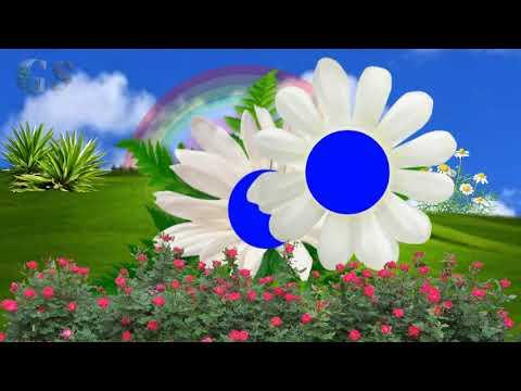 Sunflower Wedding fantastic Video green screen effect ##22 thumbnail