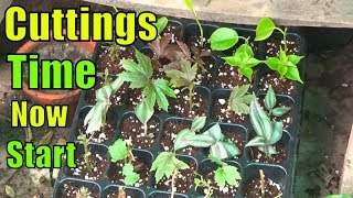 Raining Season for Cuttings   Make More Plants From Cuttings