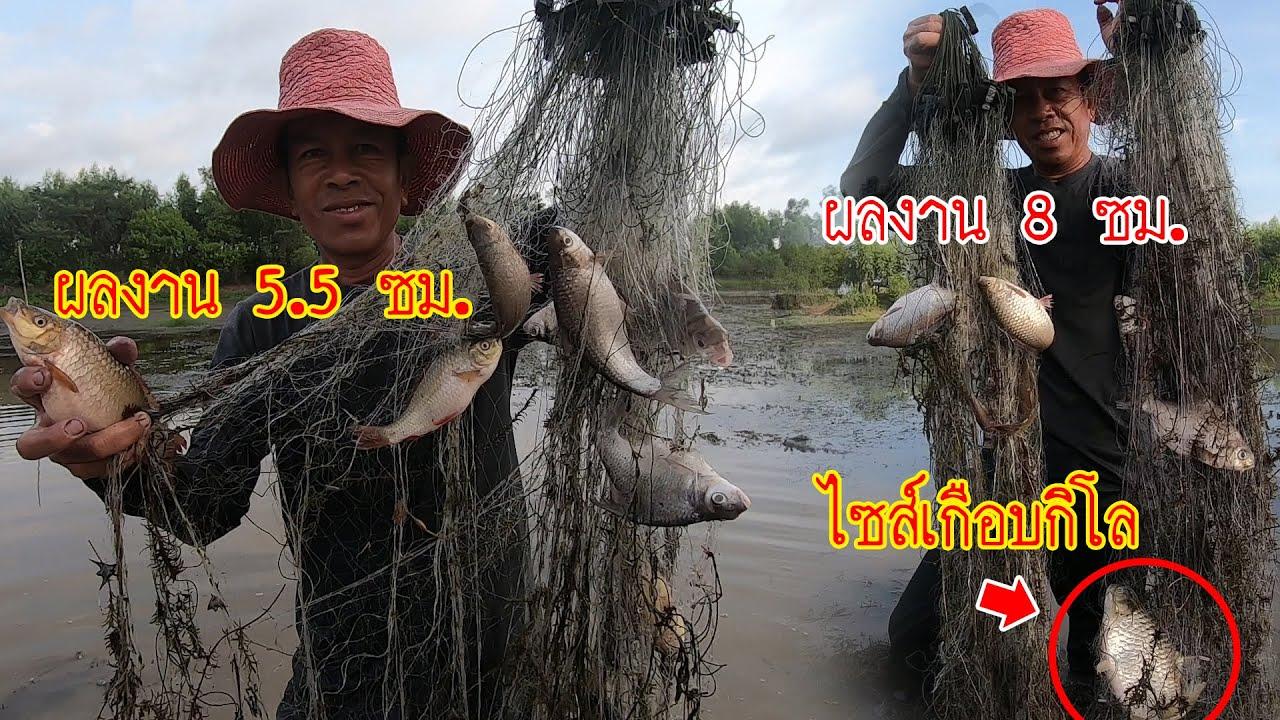 เทพแห่งการหาปลา!! พ่อน้อยซอยเดิม ยามดาง 8 ซม. 5.5 ซม. ได้ปลาแบกกลับแทบไม่ไหวเยอะมากๆ!!