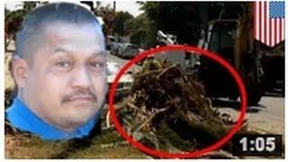 Une couronne de palmier pesant une tonne tombe sur un homme et le tue