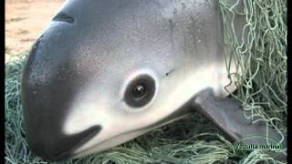 Video Top 10 animales en peligro de extinción download MP3, 3GP, MP4, WEBM, AVI, FLV Juli 2018