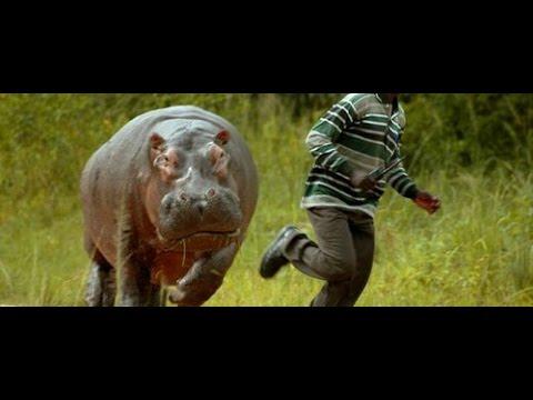 Crazy WILD Animals Chasing Humans