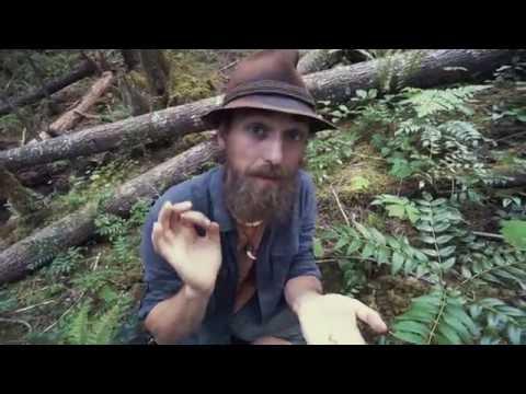 Forest Reset with Oregon Grape | Herbal Jedi | Harmonic Arts