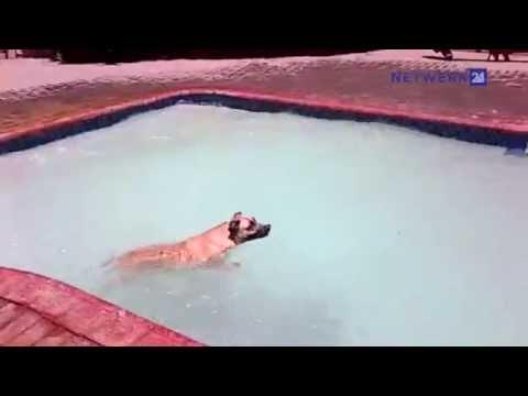 Kimberley se beroemdste hond swem steeds