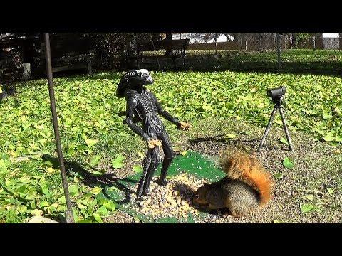 Alien vs SQUIRRELS