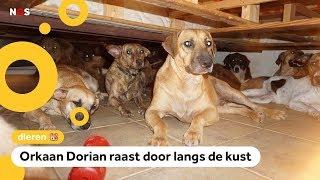 Vrouw neemt 97 honden in huis door orkaan Dorian