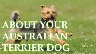BEFORE YOU ADOPT AN AUSTRALIAN TERRIER DOG...