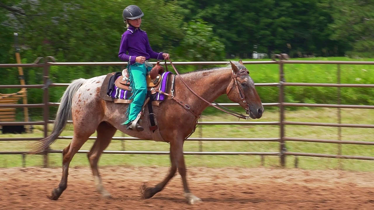 Western Horsemanship and Western Pleasure