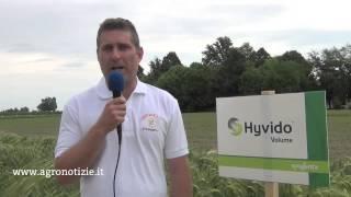 Orzi ibridi Hyvido, la tecnologia e i vantaggi