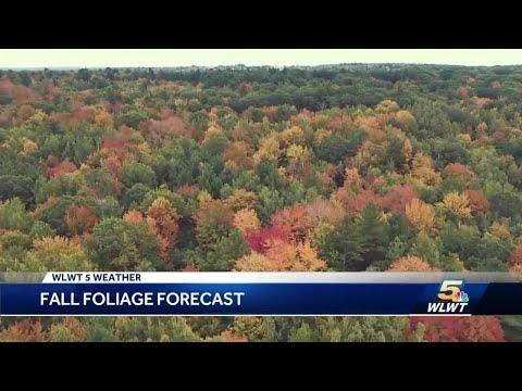 Here's When To See Peak Fall Foliage In Cincinnati