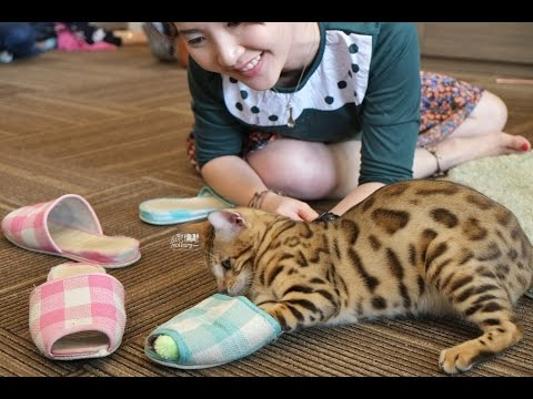 NOW on my Blog: Cutie Cats Cafe, Jakarta