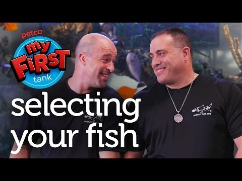 Petco And Animal Planet's Tanked Present: My First Tank - Selecting Your Fish