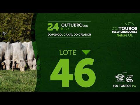 LOTE 46 - LEILÃO VIRTUAL DE TOUROS MELHORADORES  - NELORE OL - PO 2021
