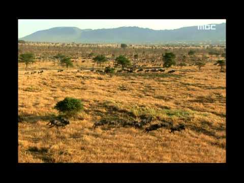 Prologue - Wildlife in Serengeti EP02, #01, 프롤로그