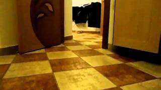 Самая умная кошка в мире))
