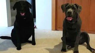 Пара была полностью опустошена после потери своих собак, но неожиданно раздался стук в двери