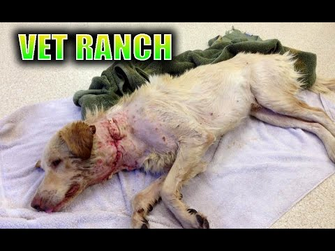 Dog Saved 1 HOUR Before Being Euthanized *GRAPHIC*