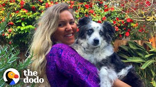 Stolen Dog Is Reunited With His Mom After Months Apart | The Dodo