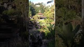 Komodo dragon Uluwatu bali Travel in indonesia 2018
