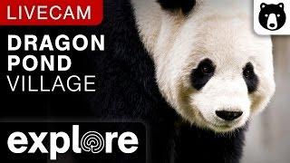 Dragon Pond Village Panda Cam powered by EXPLORE.org