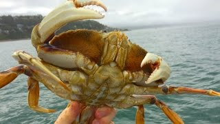 Grant's Getaways: A Dungeness Crab Dinner
