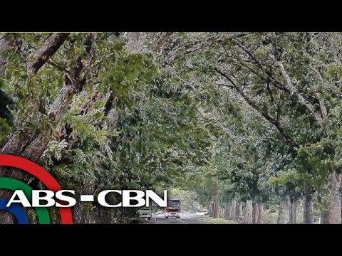 Bayan sa Zamboanga del Sur, nanawagan wag putulin ang mga acacia sa road widening project | Bandila
