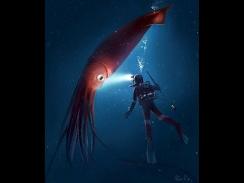 Giant Squid Caught On Camera Original Real Footage! 巨大なイカは ...