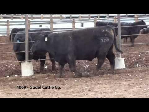 4069 - GCC UPWARD 309